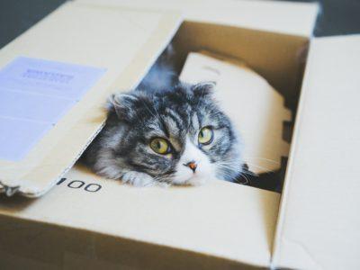 eBay輸出でおすすめの梱包資材仕入先!【サラリーマン・副業・5万円】